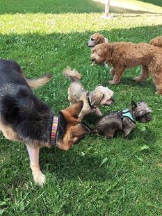 Dogs Boarders