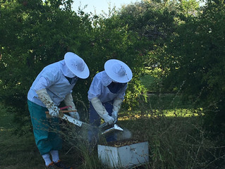 Did you hear the buzz? We are making honey!