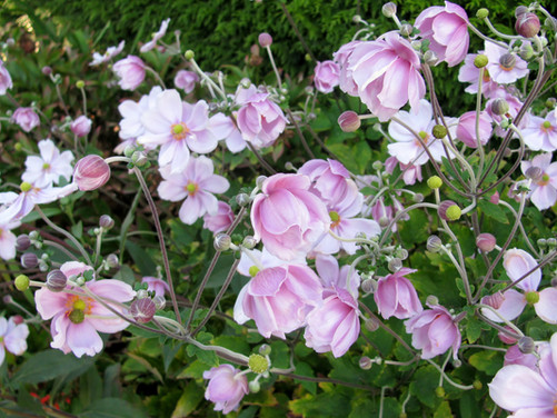 Top 5 Perennials for Autumn Color