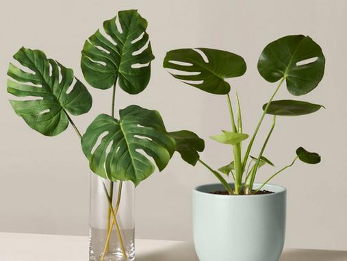 Faux Indoor Plants
