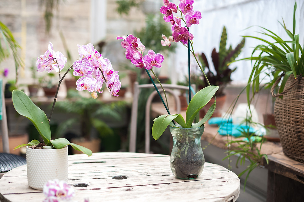 pink and purple orchids on a table.