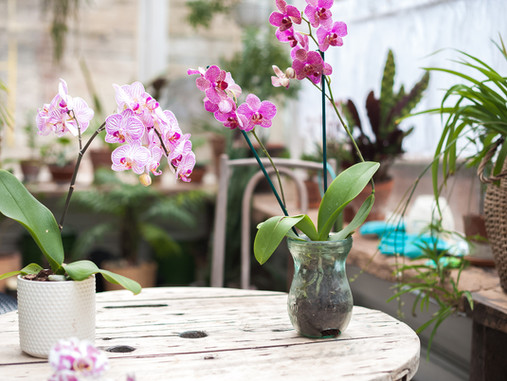 All-Things Orchids