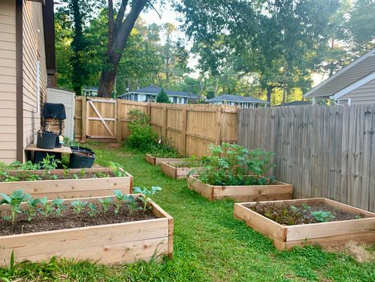 Veggie Garden Update at Greenleaf Garden