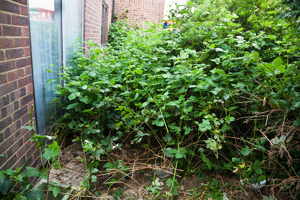 Dense, overgrown parts of the garden are ground zero for mosquito breeding and hanging out. Image by KB Wills courtesy iStock.
