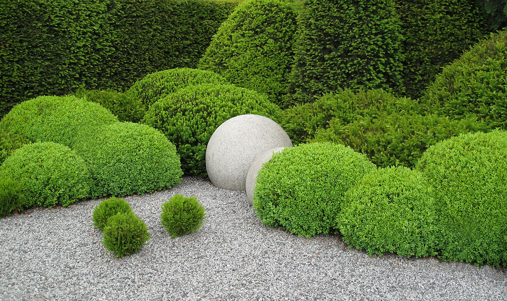 A modern garden featuring tightly-clipped boxwood and yew. Image by fotolinchen courtesy iStock.