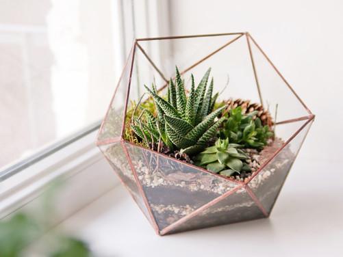 Terrariums: Bring Summer Indoors