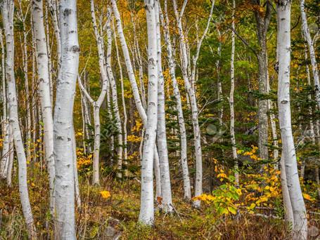 Top 5 Trees + Shrubs With Beautiful Bark