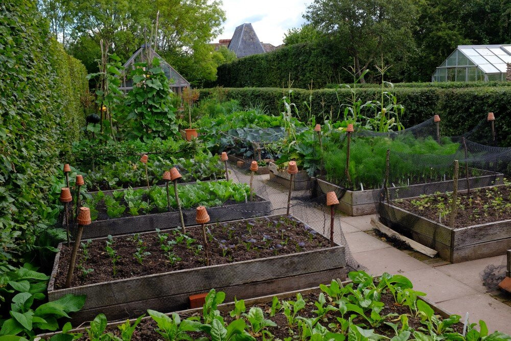 The kitchen garden of my dreams. Image courtesy Monty Don.