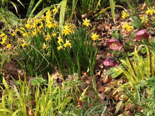 Prepping Your Garden for Spring