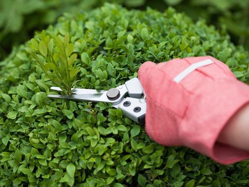 Springtime Garden Maintenance Guide