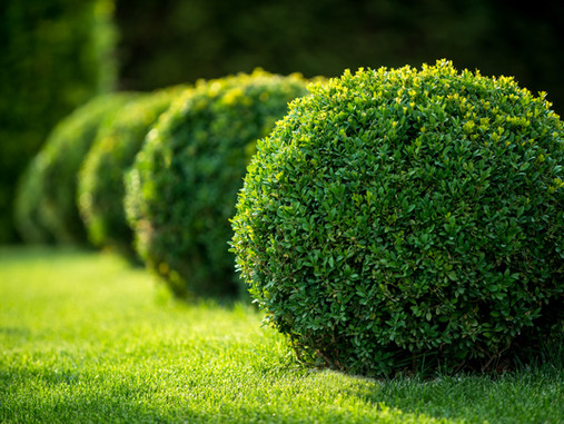 What to Plant Now: Trees + Shrubs