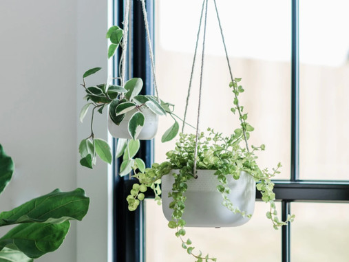 Indoors: Ceiling-Hanging Planters