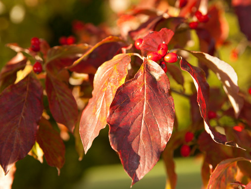 5 Plants for Dazzling Fall Color