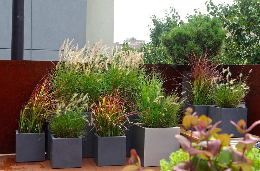 Shades of red and chartreuse add warmth and dimension to this grass-centric rooftop garden. Image by Kat Aul Cervoni courtesy Staghorn Living.