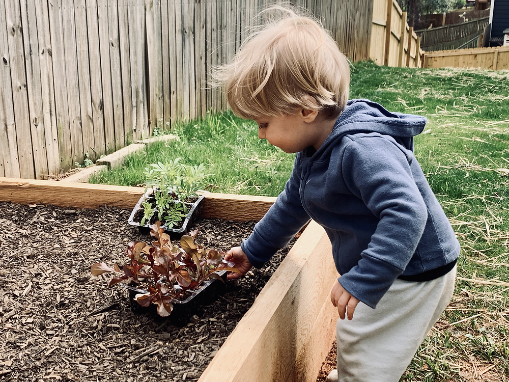 Toddlers often insist on helping in the garden. Their enthusiasm is hard to deny!