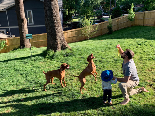 Best Practices for a Happy, Healthy Lawn