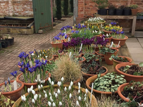 Planning Your Springtime Bulb Program