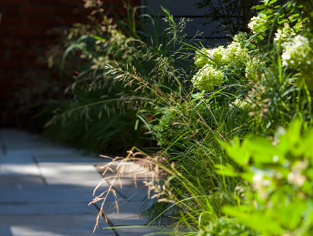 Low-to-medium height grasses a wonderful choices for the front of a border. Image courtesy Staghorn Living.