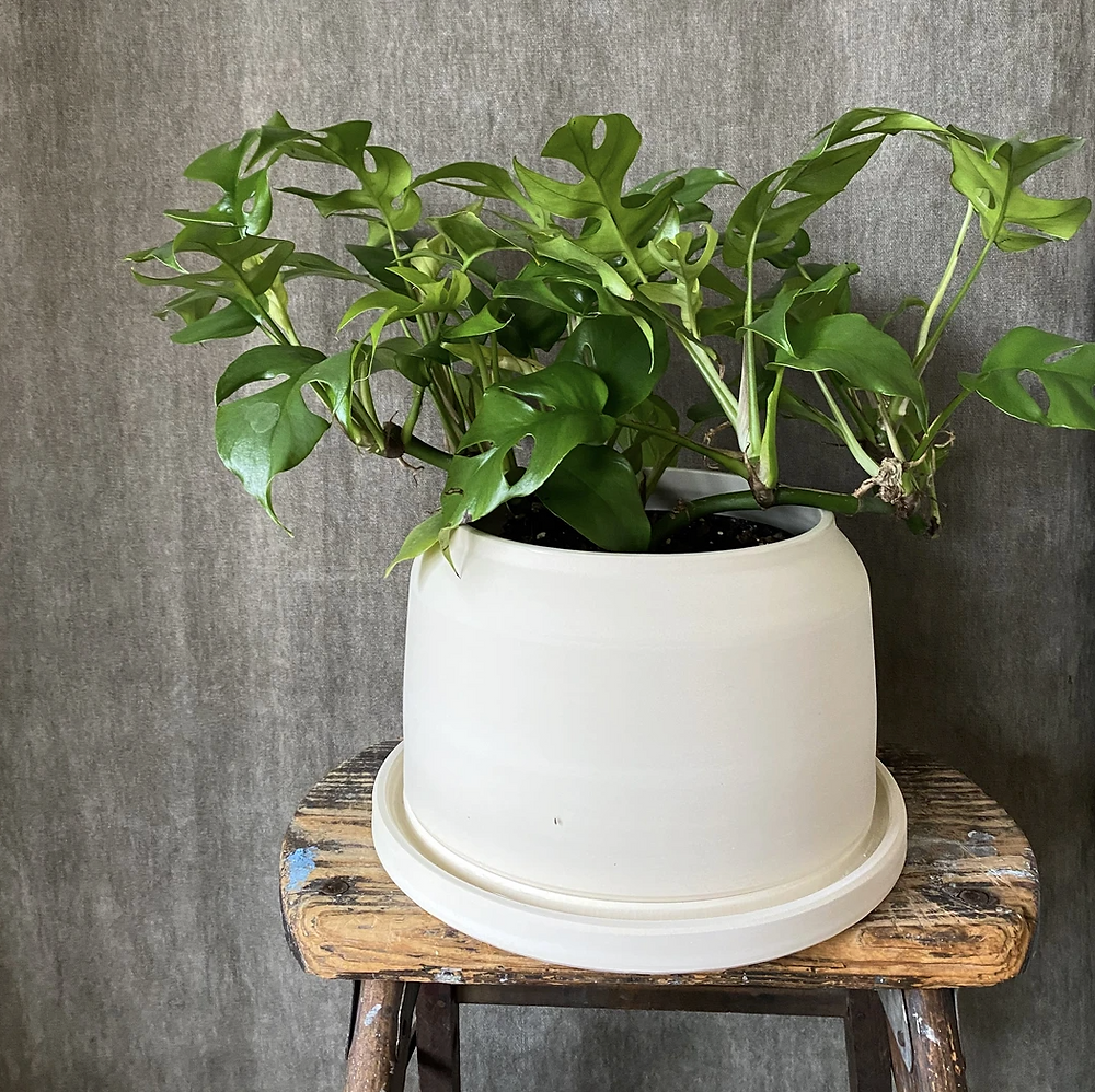 Wide unglazed planter in milky white with saucer for indoor plants from Flowerkraut in Hudson, NY.
