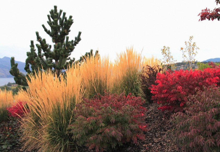 Ornamental grasses add color, texture and movement in the late-season garden scheme. Image by ConstantGardener courtesy iStock.