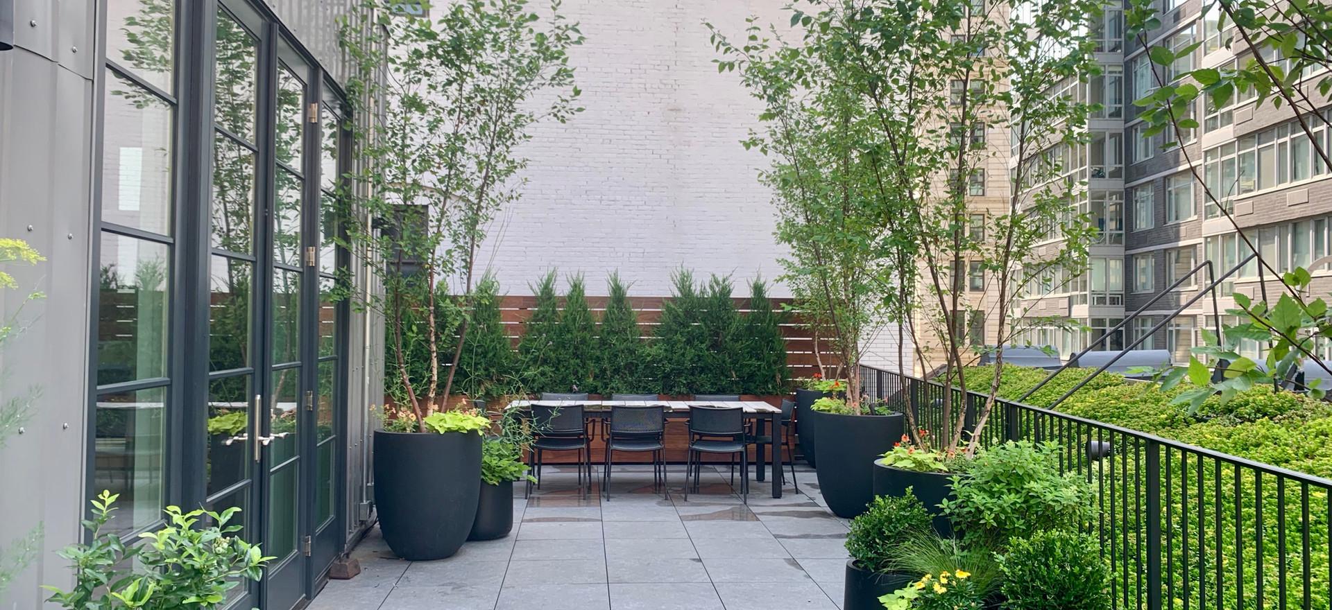 Staghorn NYC Tribeca Rooftop Garden
