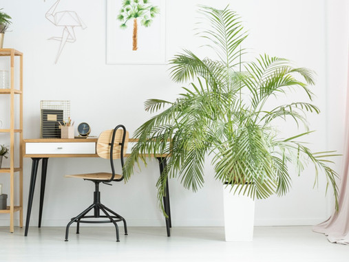 Pet-Friendly Indoor Plants
