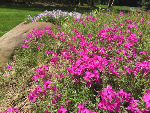 What to Plant Now: Spring-Blooming Perennials