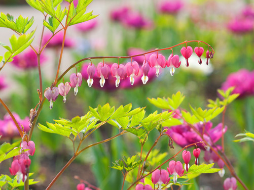 What to Plant Now: Shade Plants
