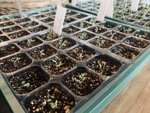 Starting Your Seeds Indoors