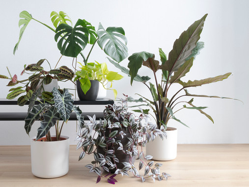 Indoor Plants in Winter