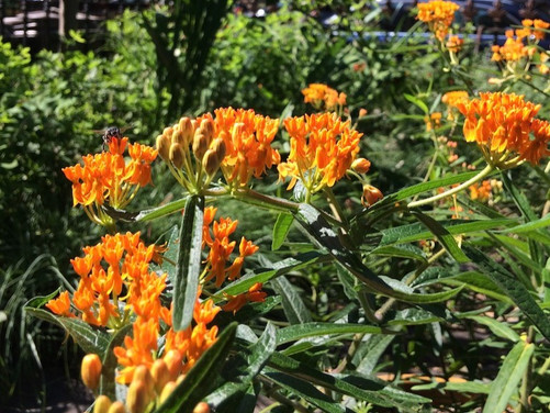 What to Plant Now: Pollinator-Friendly Plants