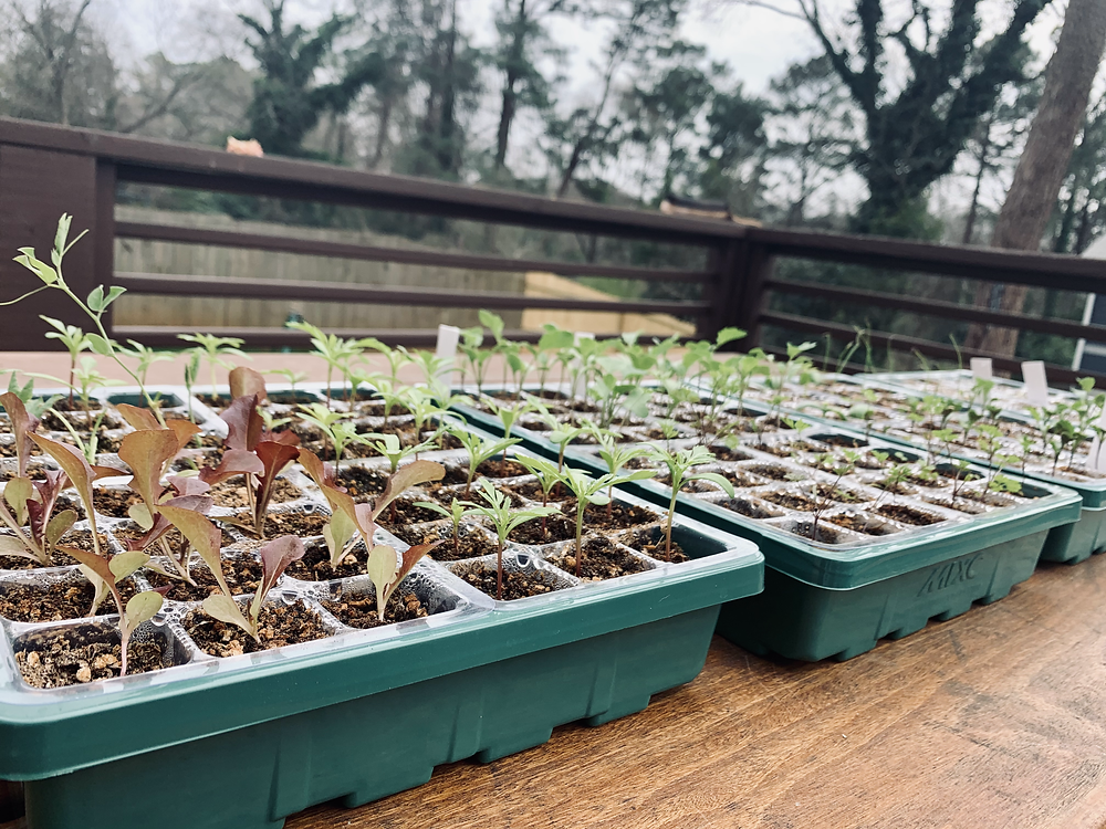 Seedlings need a bit of special care along the way to ensure they're growing into strong, healthy plants.
