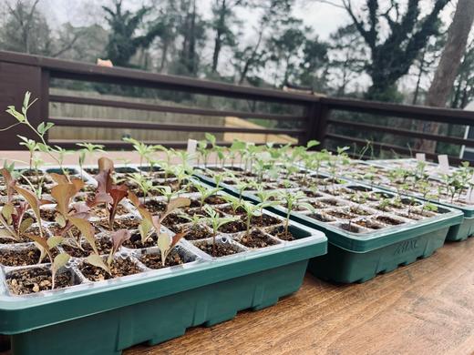 Managing + Planting Seedlings