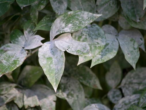Overcoming Late-Summer Garden Issues