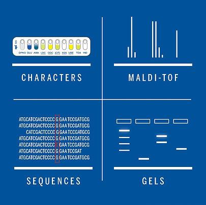 Characters-Maldi.jpg
