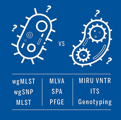 wgMLST wgSNP MLST.jpg