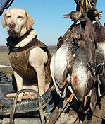 Duck Skittles.jpg