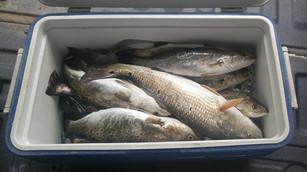 fish cooler.jpg