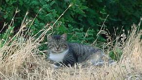 Meet the Cats: Nick