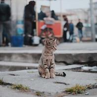 street-cat-1.jpg
