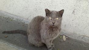 Meet the cats: Jane