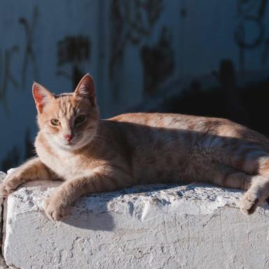 street-cat-03.jpg