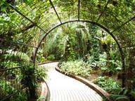 Garden 7.jpeg
