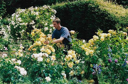 Deadheading Roses 2004