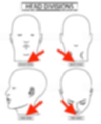 Head Divisions.jpg