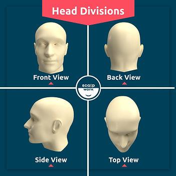 Head Divisions.jpeg