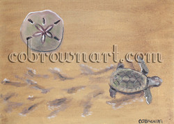 Turtle and the Sand Dollar