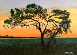 Pulaski Tree