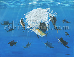 Sailfish Feeding on Baitball