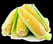 sweet corn.png